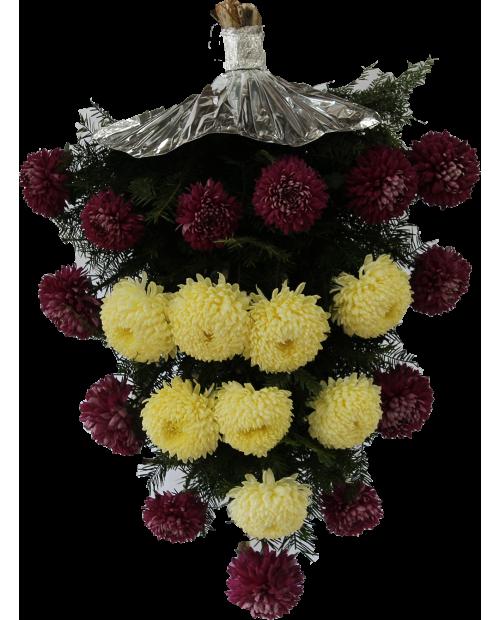 Jerba Crizantema Romanesca De Sezon